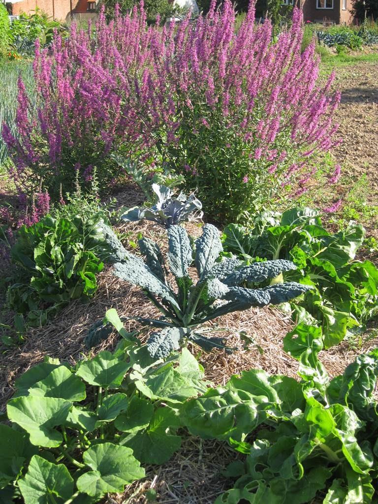 potager en permaculture nethen la terre est un jardin. Black Bedroom Furniture Sets. Home Design Ideas
