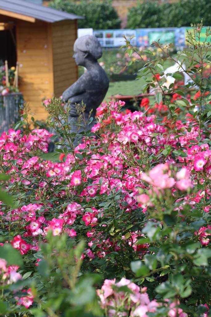 Roeulx Concours International de roses nouvelles