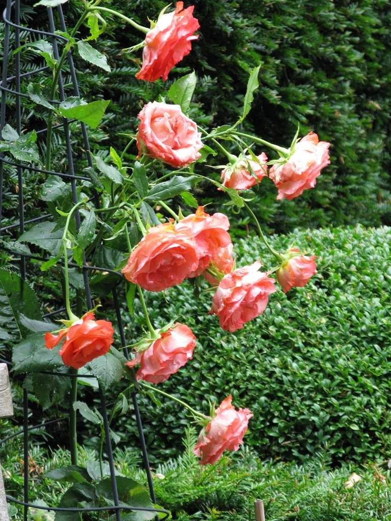 Un jardin haute couture