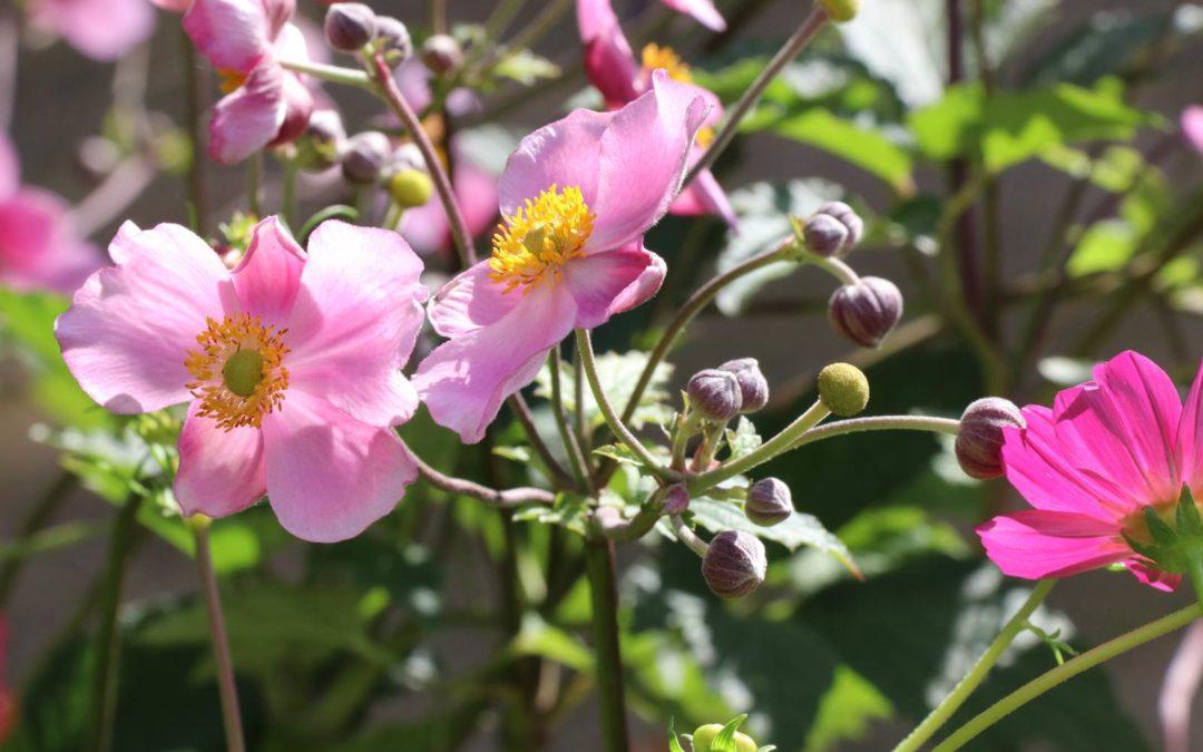 Mon jardin en août