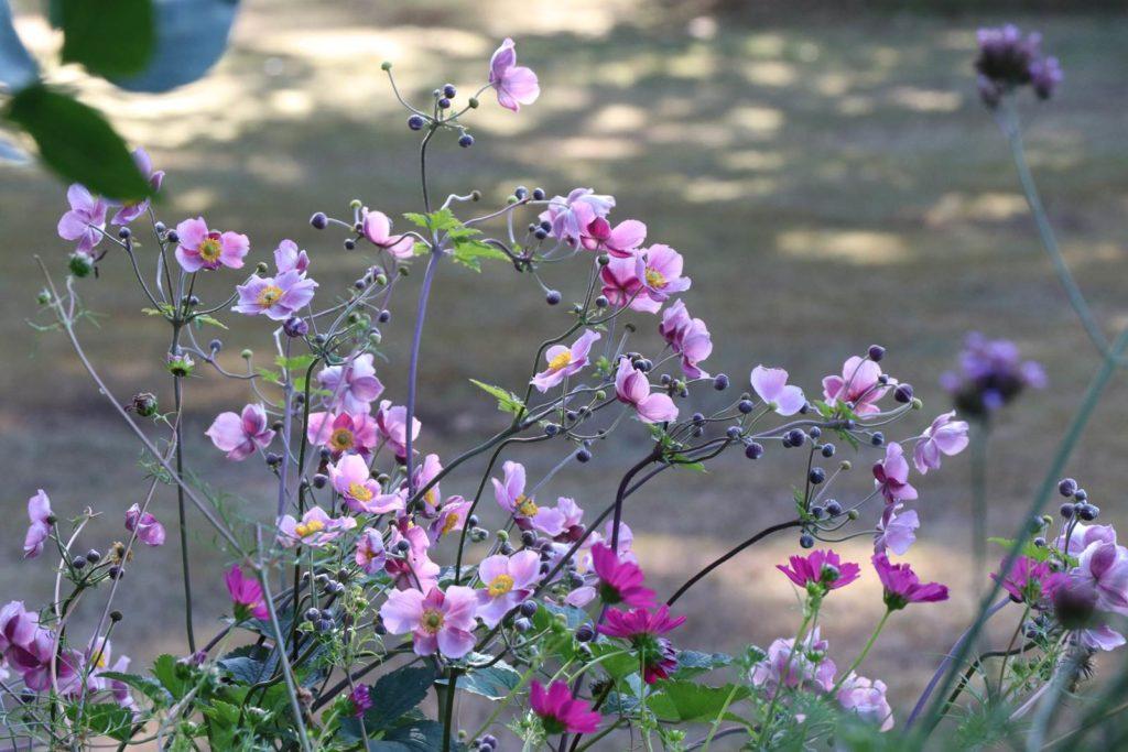 aout au jardin