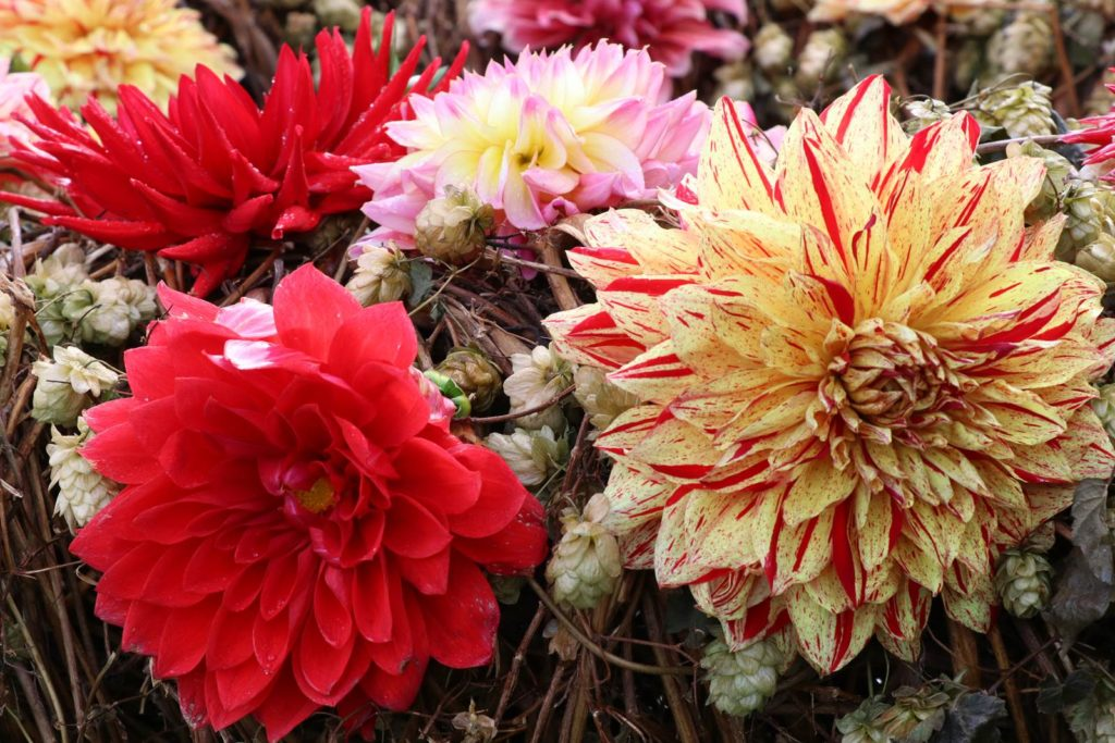 Beervelde atalier d'art floral