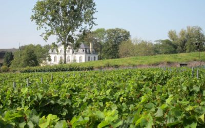 Le vignoble du Clos d'Opleeuw