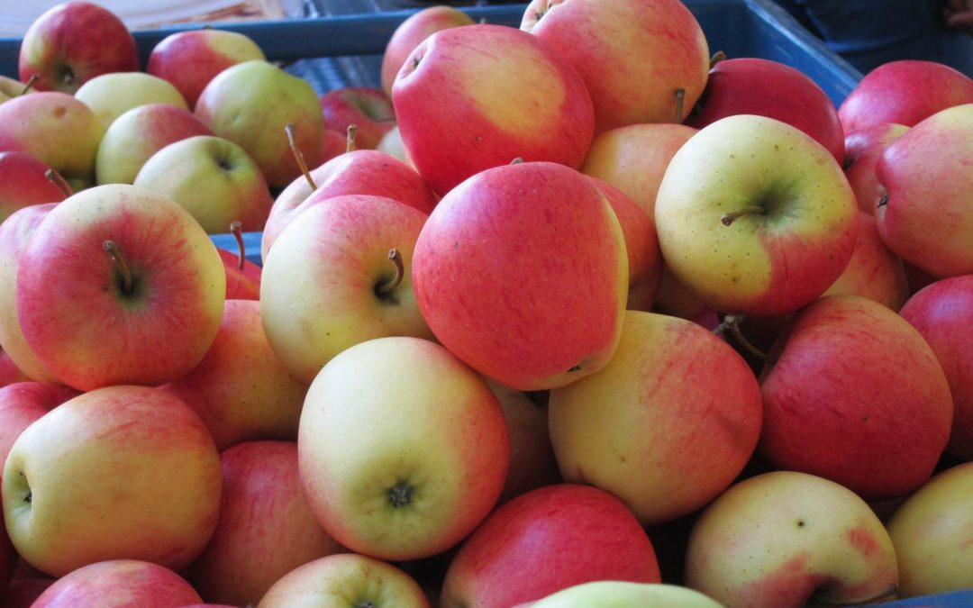 Fête de la pomme à Céroux Ottignies