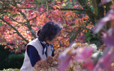 't Heikehof, la petite bruyère de Yukiko