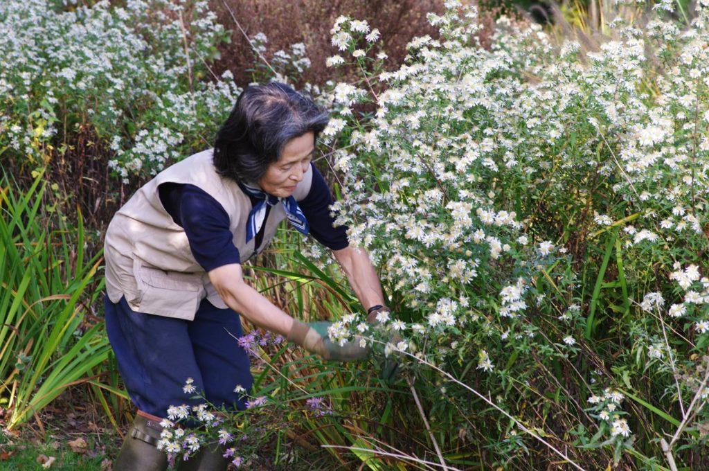 Le jardin de Yukiko