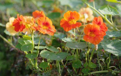 Sous les Tilleuls, un jardin nourricier et inspirant
