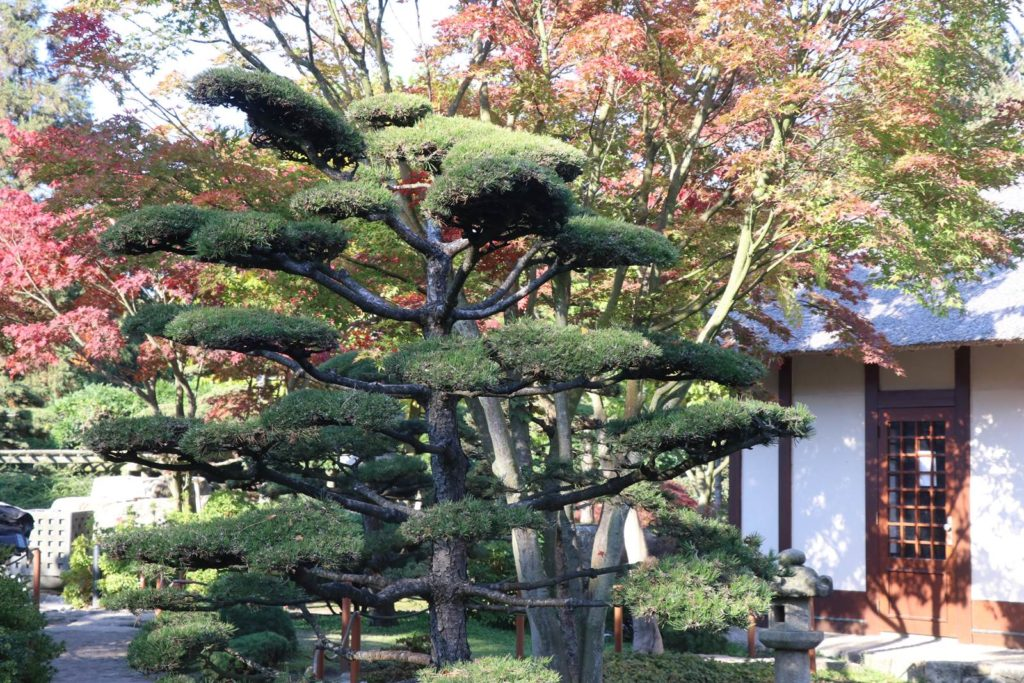 Hambourg jardin japonais