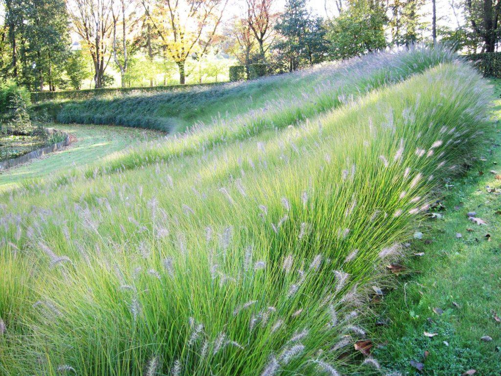 Planter Dans Un Talus les graminées ornementales au jardin, guide pratique - la