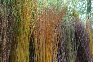 Ecorces Salix