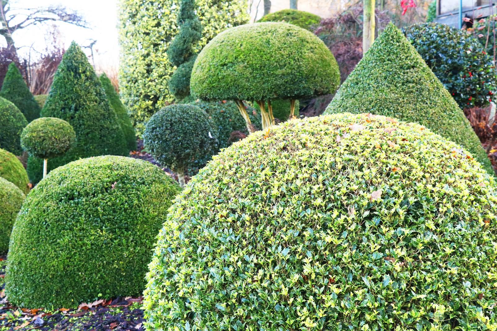 Arbuste Persistant Pour Pot topiaire, par quoi remplacer le buis? - la terre est un jardin