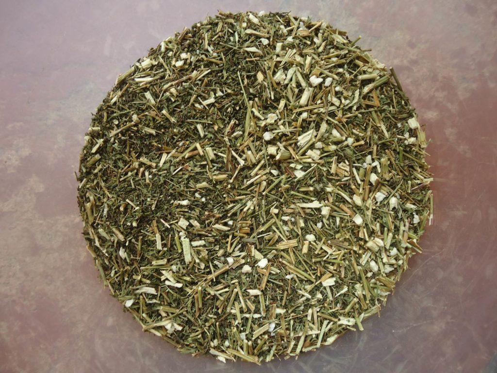 Artemisia annua