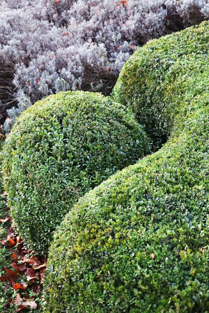 Décembre au jardin