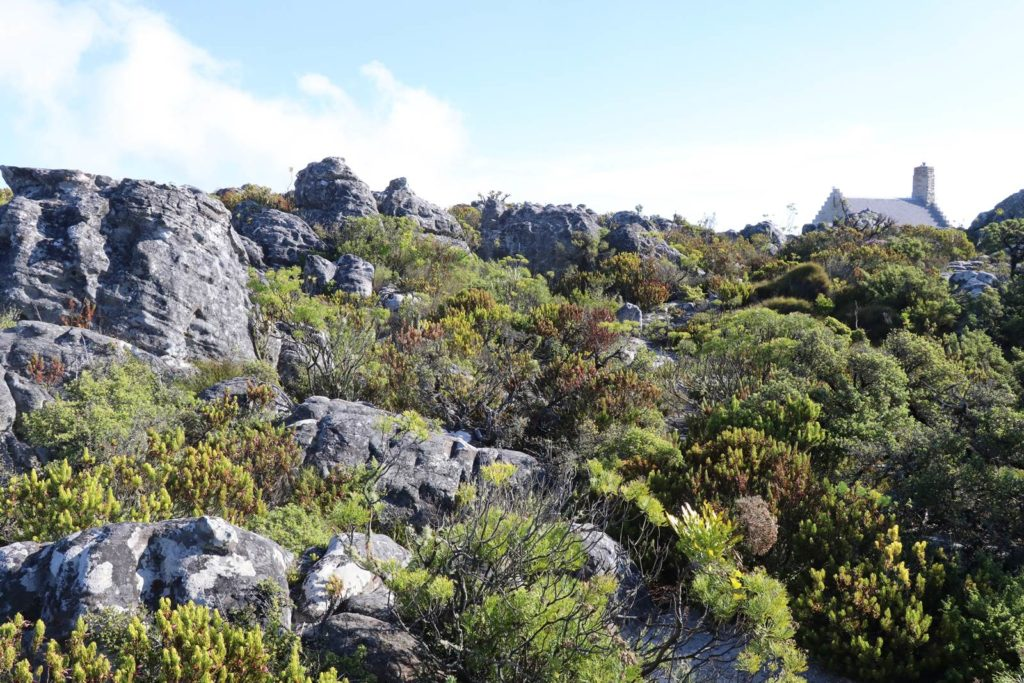 Le Cap Table Mountain