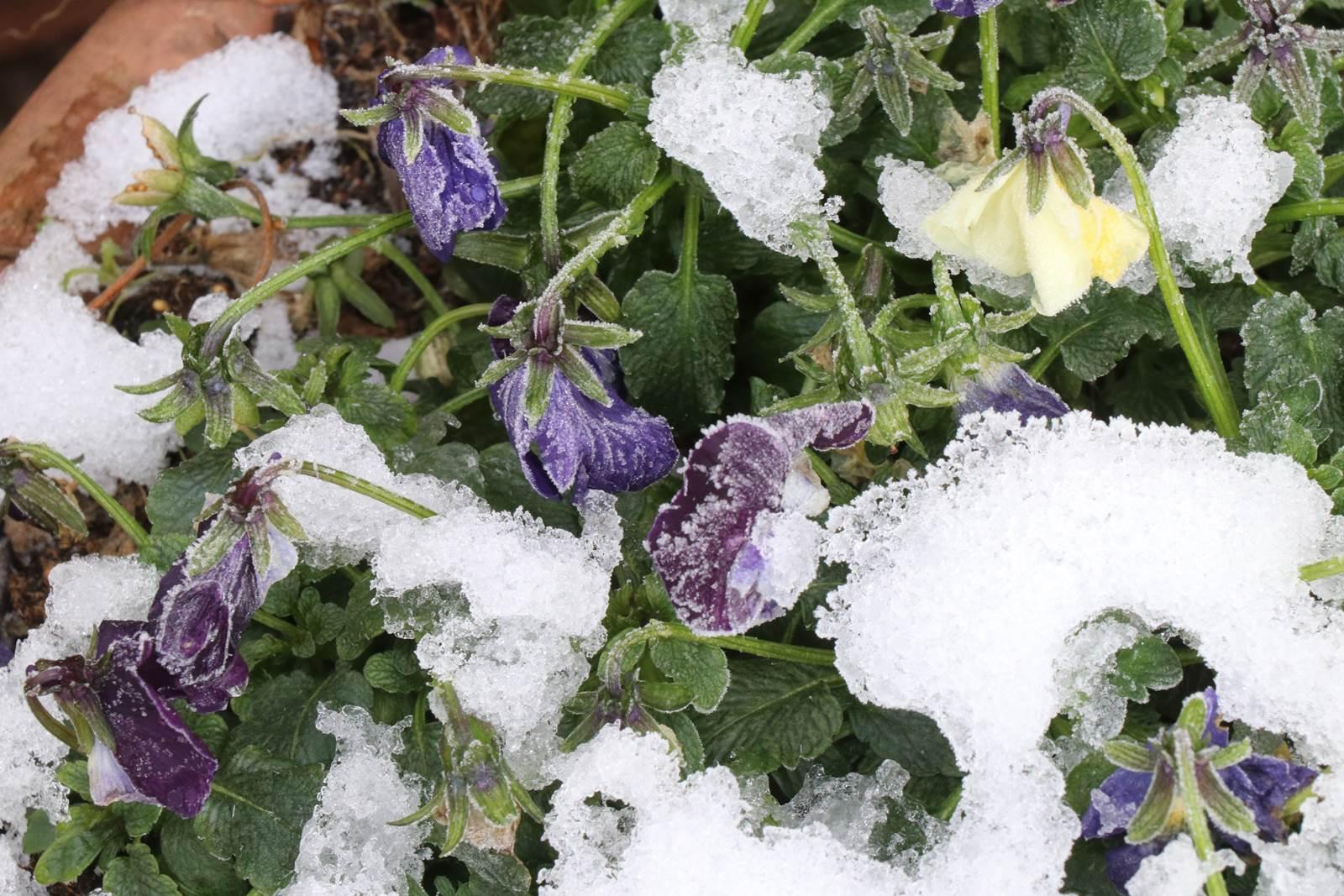 Janvier au jardin