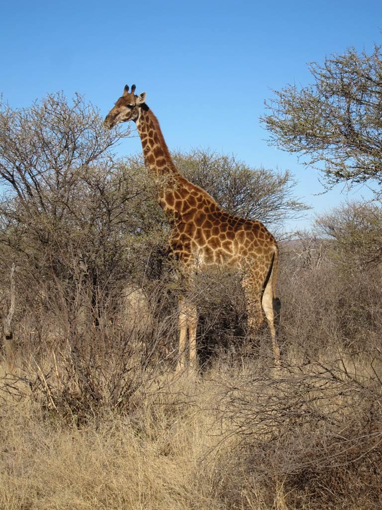 Mmadikwe Game Reserve