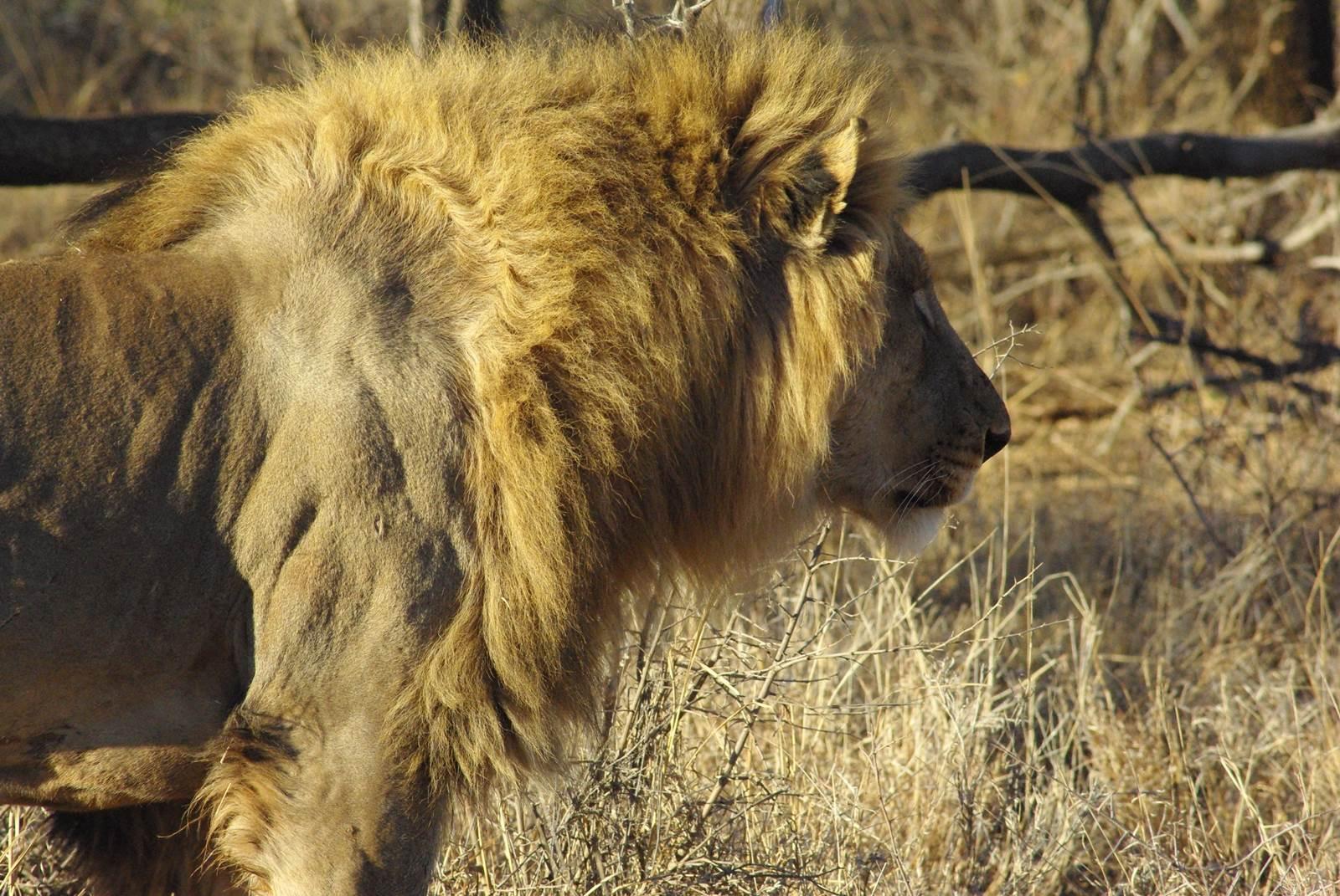 Madikwe Game Reserve