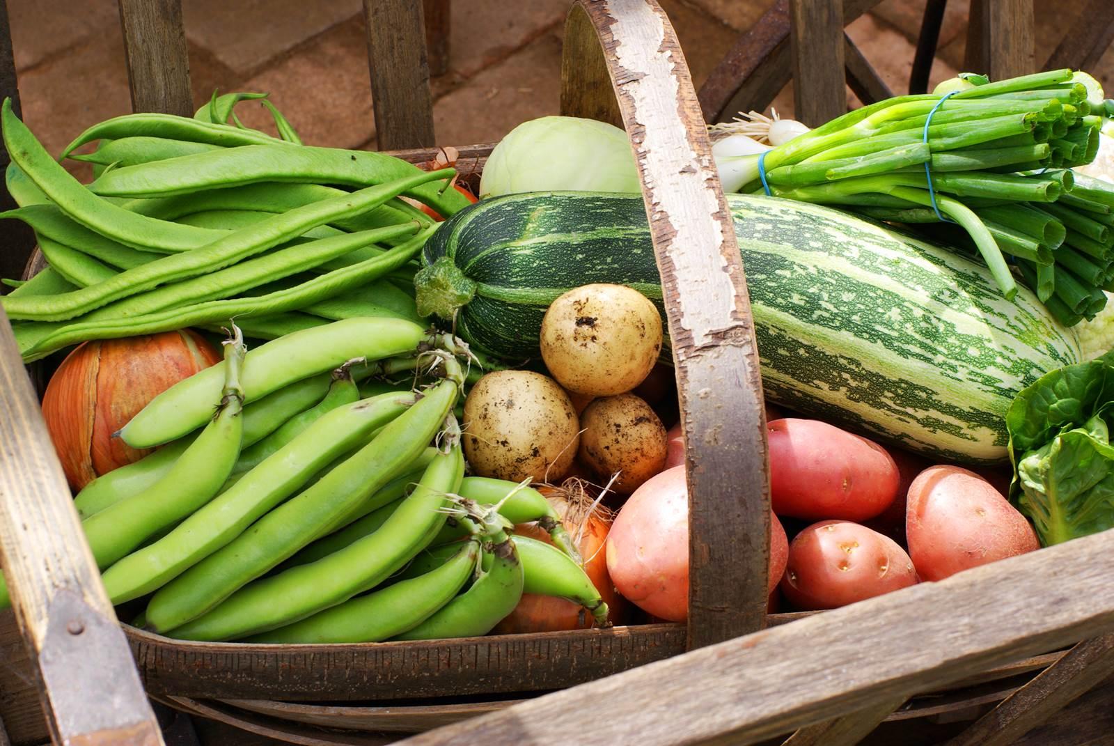 Que Faire Dans Le Potager En Fevrier le calendrier du potager, mois par mois - la terre est un jardin