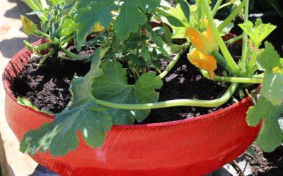 Potager mobile, en pots, sacs et jardinières