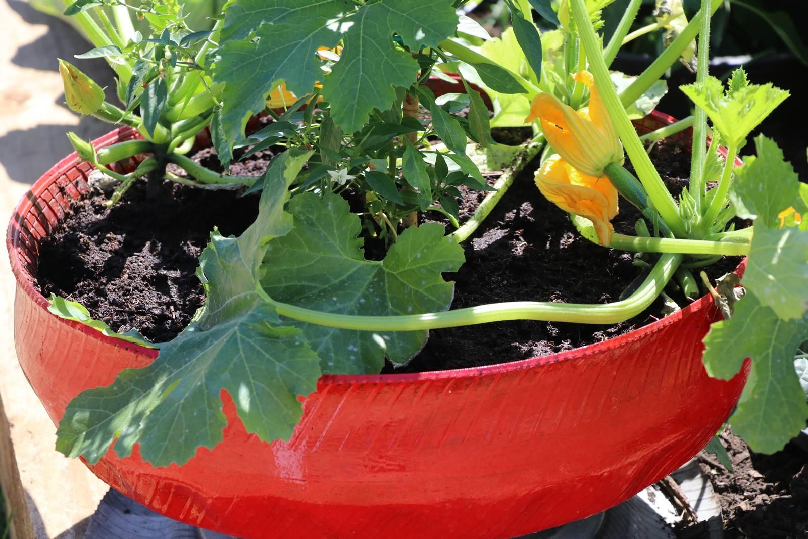 Potager Mobile En Bois potager mobile, en pots, sacs et jardinières - la terre est