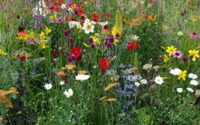 Prairies fleuries, composez avec la nature