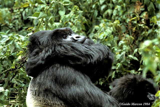 Rwanda (c) Guido Marcon