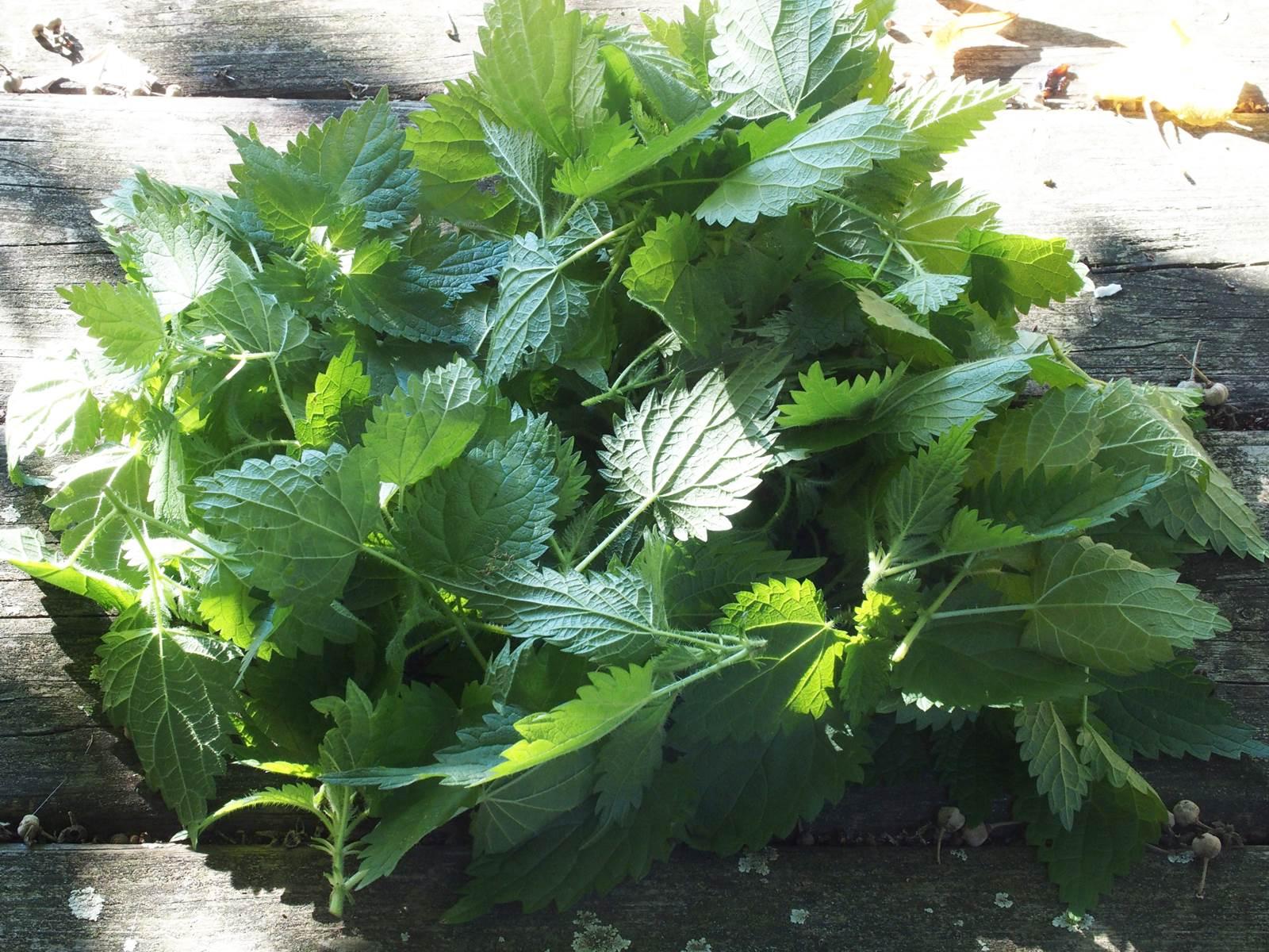 Fleur De Sous Bois Bleue plantes sauvages comestibles, à table! - la terre est un jardin