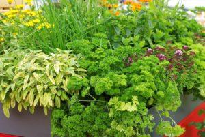 Avril almanach du jardinier