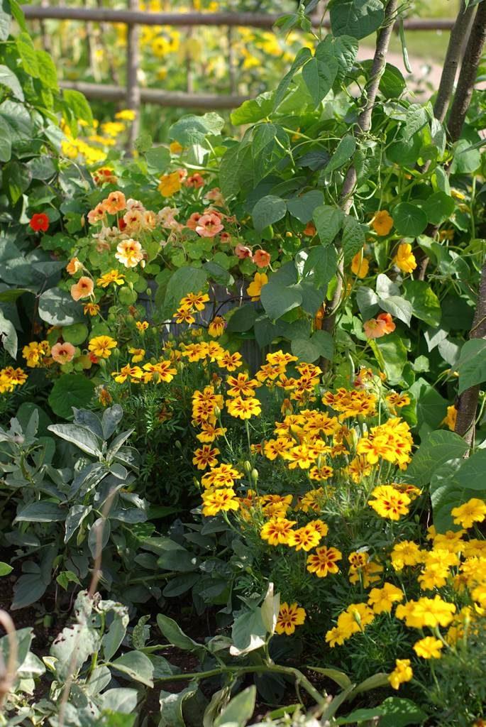 Des plantes pour soigner le jardin