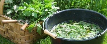 Des plantes qui soignent le jardin