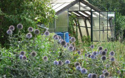 Le jardin nature de Philippe Delwiche