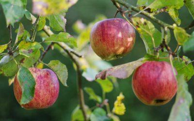 Jardiner bio, c'est sain et naturel