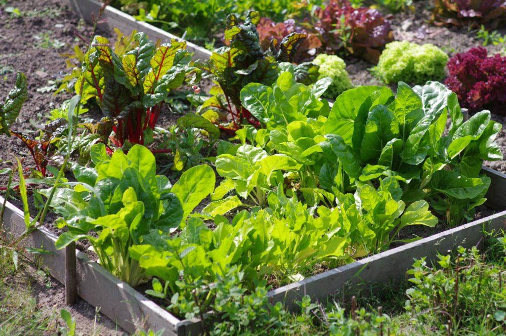 Jardins partagés