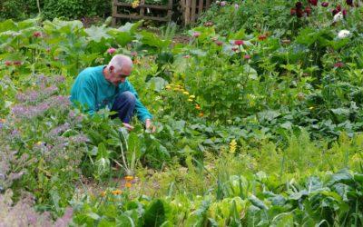 Jardins partagés, des oasis dans la cité