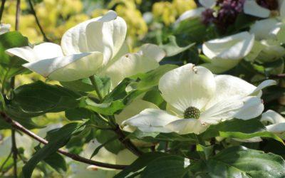 Mai, Almanach du jardinier