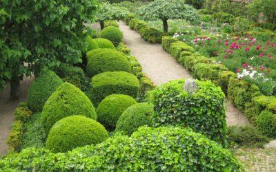 Le jardin de pivoines de Marie