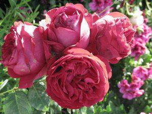 Aout almanach du jardinier