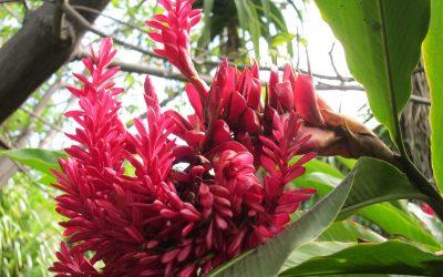 Le Jardin d'Eden, un paradis à la Réunion