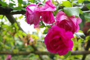 Juillet almanach du jardinier