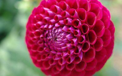 Août, Almanach du jardinier
