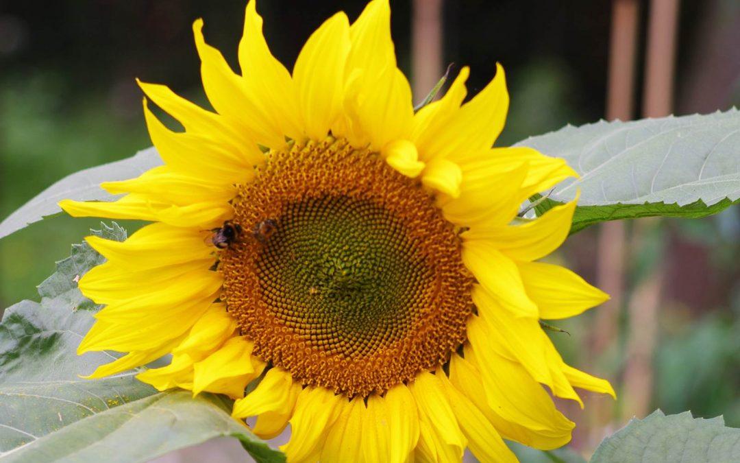Septembre, Almanach du jardinier