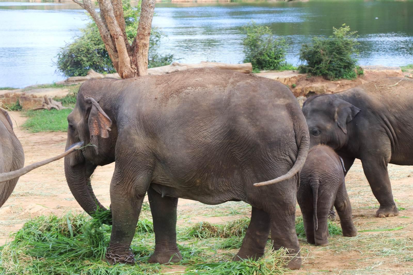 Bangalore safari