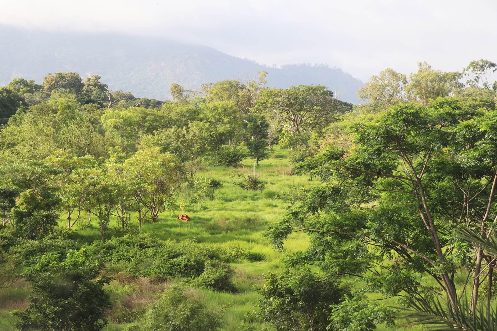 Karnataka Inde du Sud
