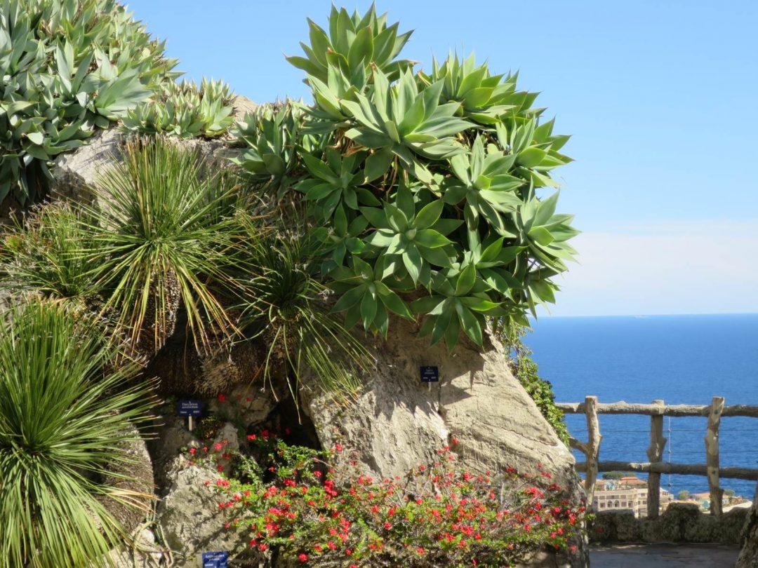 Jardni exotique de Monaco