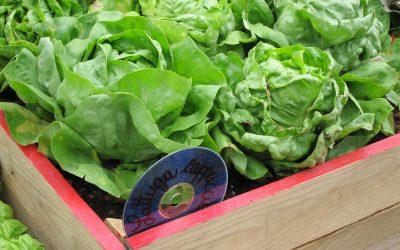 La salade, on adore!