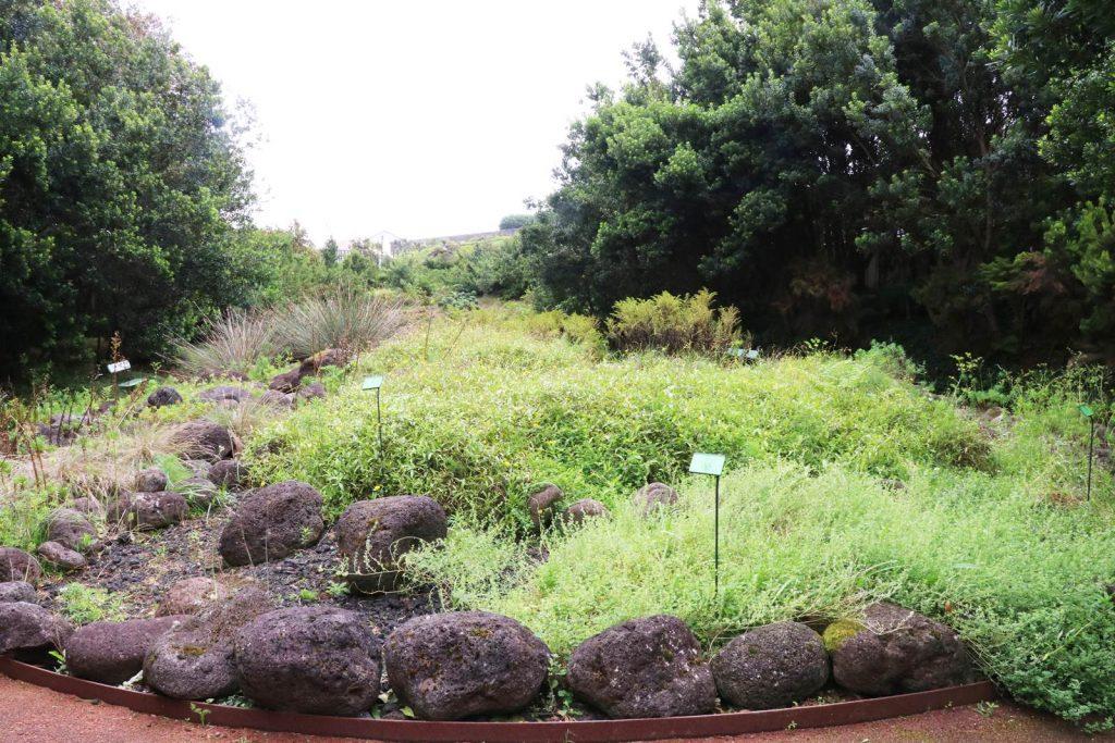 Jardin botanique de Faial