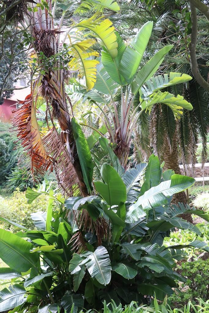 Acores jardin duc de Terceira