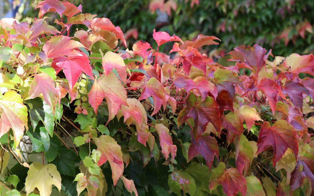 Novembre, Almanach du jardinier