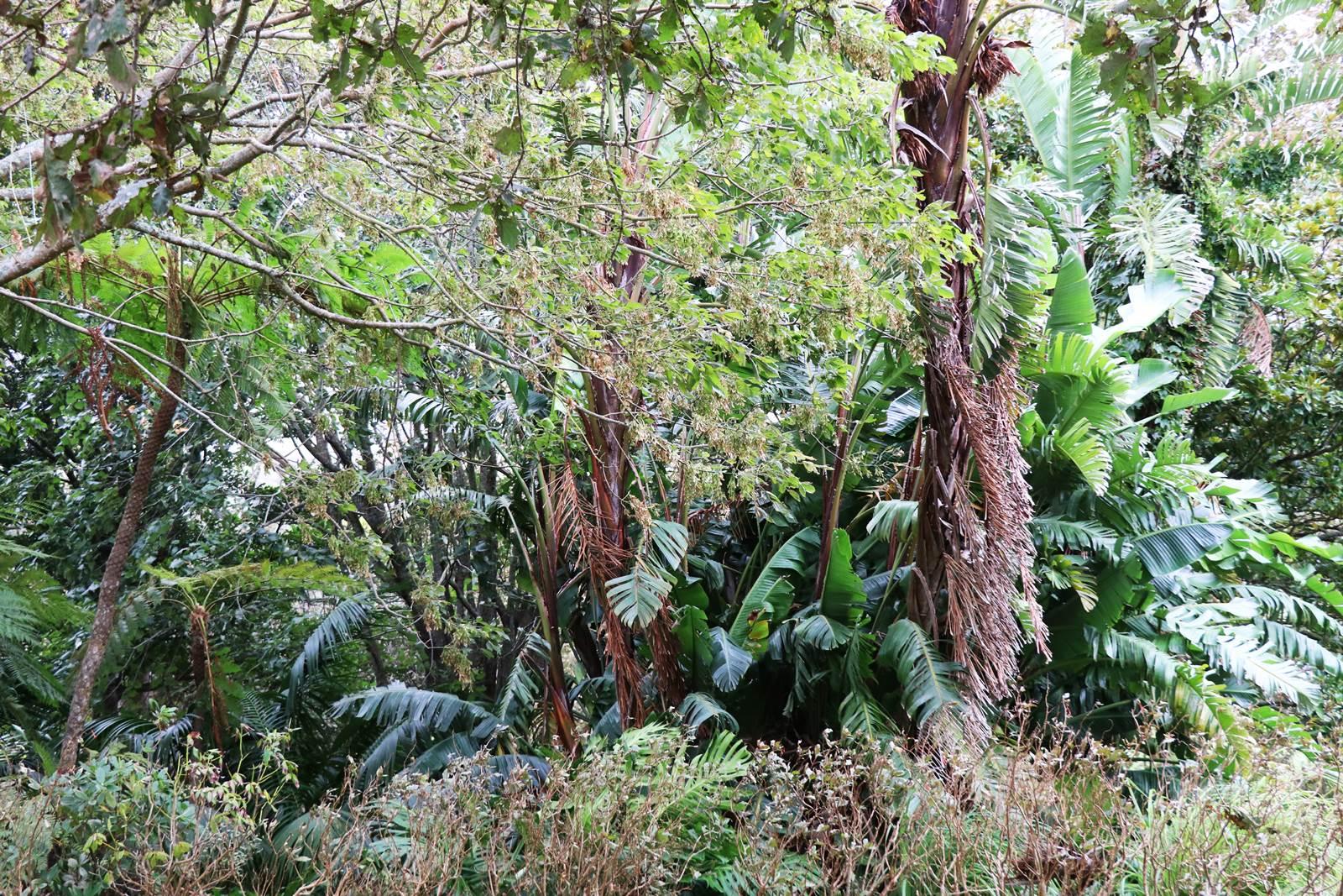 Faial Botanic Garden