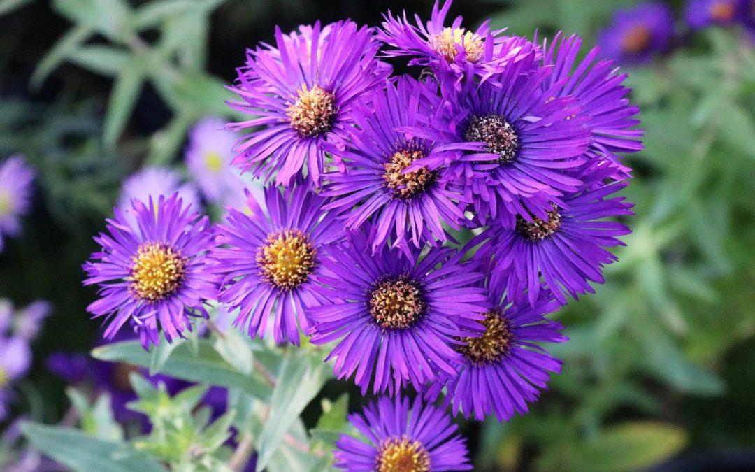 Octobre, Almanach du jardinier